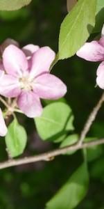 Flowers Spring-770