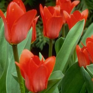 Flowers CropOne