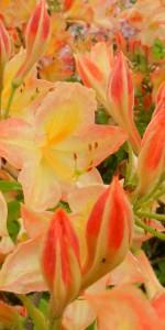 Flowers springCrop