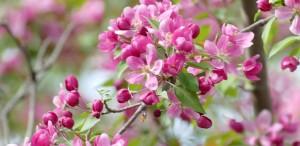 Flowers HP Crop